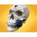 Crâne Vampire et Rose Noire Crânes Squelette Gothique Alchemy Gothic